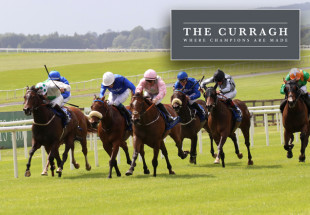 """Tipperary Crystal """"Rose"""" Race Day at the Curragh"""